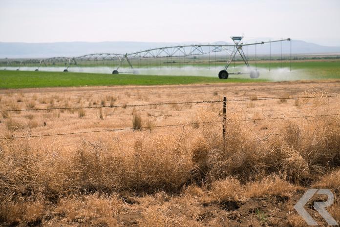 Irrigation and tumbleweeds.