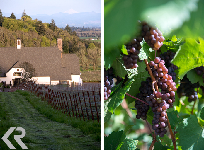 Zenith Vineyards and ripe grapes