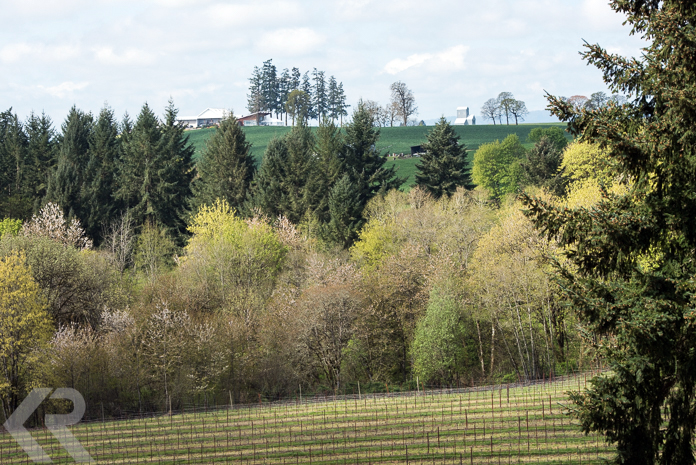 Vineyards and forest near Stoller Family Estate